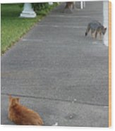 D-a0050-dc Gray Fox And Our Cat On Our Pool Deck Wood Print