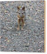 D-a0051-dc Gray Fox Pup Wood Print