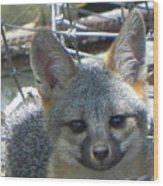 D-a0068 Gray Fox Pup Wood Print