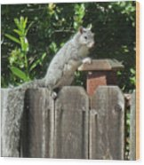 D-a0071-e-dc Gray Squirrel On Our Fence Wood Print