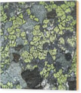 D07343-dc Lichen On Rock Wood Print