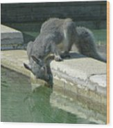 D2b6341-dc Gray Squirrel Drinking From The Pool Wood Print