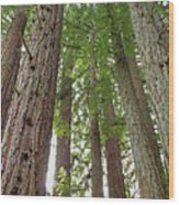 D6b6390 Wood Print