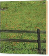 D7b6306 Fence And Poppies Wood Print