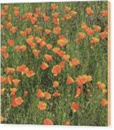 d7b6307 California Poppies Wood Print