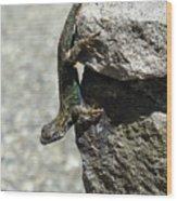 D7b6335 Western Fence Lizard, Male, Sonoma Mountain, Ca Wood Print