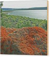 Da5869 Lichen Covered Rock Wood Print