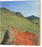 Da5872 Lichen Covered Rock Below Abert Rim Wood Print