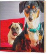 Dachshund Dog, Pug Dog, Good Time On Bed Wood Print