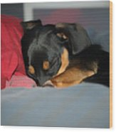 Dachshund Dog, Pug Dog, Good Time On Bed, Sleeping Wood Print