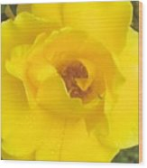 Daddy's Rose Wood Print