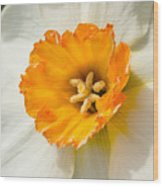 Daffodil Narcissus Flower Wood Print