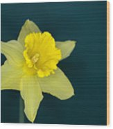 Daffo The Dilly Wood Print