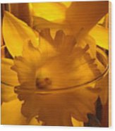 Daffodiil Flowers Evening Glow 9 Contemporary Modern Art Print Giclee Wood Print