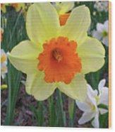 Daffodil 0796 Wood Print