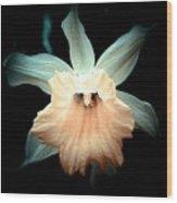 Daffodil #19 Wood Print