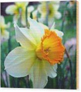 Daffodil 2 Wood Print