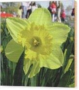 Daffodil Close Up Wood Print by Richard Mitchell