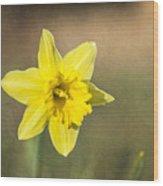 Daffodil Composite Wood Print