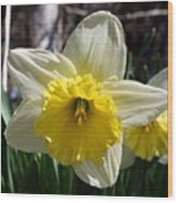 Daffodil Days Wood Print