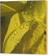 Daffodil Dew Wood Print