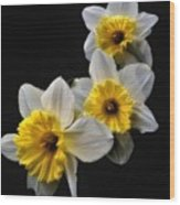 Daffodil Dream Wood Print