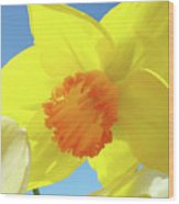Daffodil Flowers Artwork 18 Spring Daffodils Art Prints Floral Artwork Wood Print