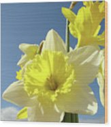 Daffodil Flowers Artwork Floral Photography Spring Flower Art Prints Wood Print