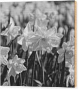 Daffodil Glow Monochrome By Kaye Menner Wood Print