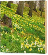 Daffodil Hill Wood Print