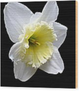 Daffodil On Black Wood Print