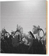 Daffodil Party Wood Print