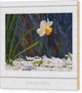 Daffodil Poster Wood Print
