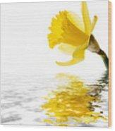 Daffodil Reflected Wood Print by Jane Rix