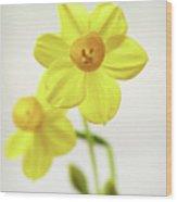 Daffodil Strong Wood Print