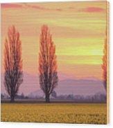 Daffodil Sunrise Wood Print