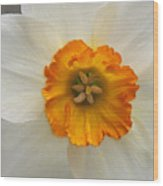 Daffodil Texture Composite Wood Print