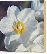 Daffodil Up Close Wood Print