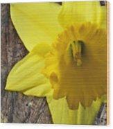 Daffodil Wood Composite Wood Print