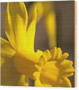 Daffodil Yellow Wood Print