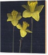 Daffodilia II Wood Print