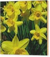 Daffodils 2010 Wood Print