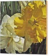 Daffodils 4 Wood Print
