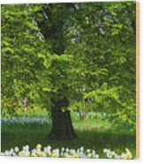 Daffodils And Narcissus Under Tree Wood Print