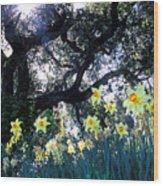 Daffodils And The Oak Wood Print