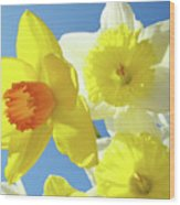 Daffodils Art Print Floral Sky Bouquet Daffodil Flower Baslee Wood Print