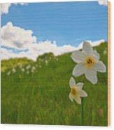 Daffodils Blossimg At Cavalla Plains 2017 Iv - Fioritura Dei Narcisi Al Pian Della Cavalla 2017 Wood Print