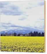Daffodils By The Million Wood Print