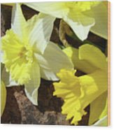 Daffodils Flower Bouquet Rustic Rock Art Daffodil Flowers Artwork Spring Floral Art Wood Print