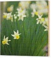 Daffodils In A Bunch Wood Print